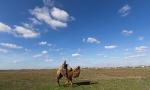 Верблюжьи бега - 2013_10