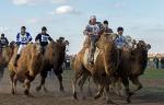 Верблюжьи бега - 2013_13