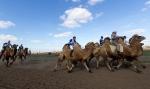 Верблюжьи бега - 2013_14