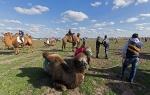 Верблюжьи бега - 2013_21