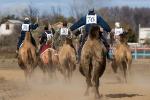 Верблюжьи бега - 2013_25