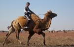 Верблюжьи бега_12