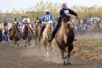 Верблюжьи бега_3