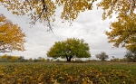 Осень_8
