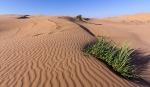 Пустыня_12