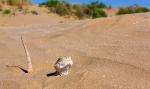 Пустыня_36
