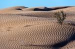 Пустыня_4