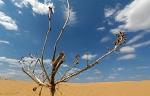 Пустыня_52