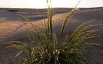 Пустыня_55