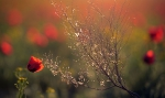 Цветущая степь_25