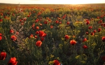 Цветущая степь_42