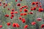 Цветущая степь_52