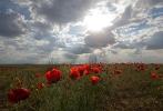 Цветущая степь_53