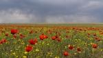 Цветущая степь_10