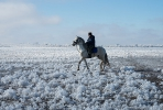 Казачьи конюшни_14