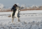 Казачьи конюшни_16
