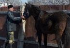 Казачьи конюшни_22
