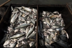 Рыболовство_20