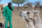 Верблюжья ферма_12