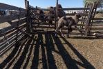 Верблюжья ферма_21