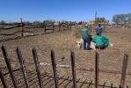 Верблюжья ферма_24