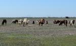 Верблюжья ферма_33