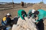 Верблюжья ферма_7