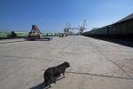 Порт Оля_5
