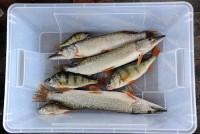 Рыбалка в Астрахани - лето_16