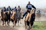 Верблюжьи бега - 2013