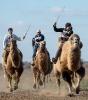 Верблюжьи бега - 2013_19