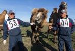 Верблюжьи бега - 2013_1