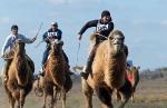 Верблюжьи бега - 2013_20