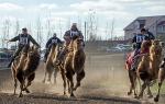 Верблюжьи бега - 2013_23