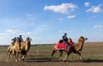 Верблюжьи бега - 2013_31