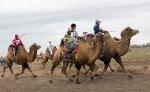 Верблюжьи бега_2