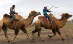 Верблюжьи бега_5