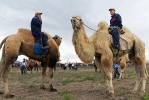 Верблюжьи бега_6