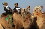 Верблюжьи бега_7
