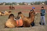 Верблюжьи бега_9