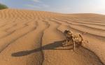 Пустыня_23