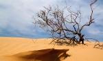Пустыня_25
