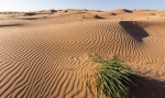 Пустыня_2