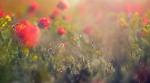 Цветущая степь_24