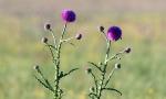 Цветущая степь_28