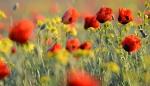 Цветущая степь_41