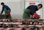Рыбопереработка СХП Понизовье